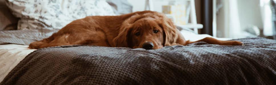 Är din hund orolig eller stressad?